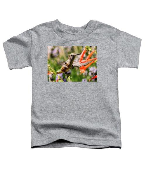 Female Broadtail Humingbird Toddler T-Shirt