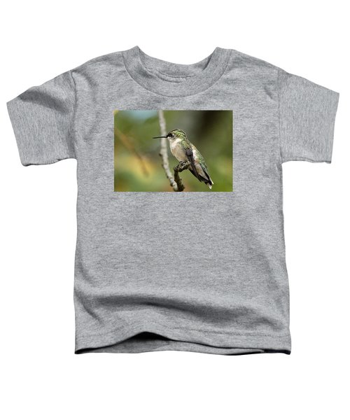 Female Ruby-throated Hummingbird On Branch Toddler T-Shirt