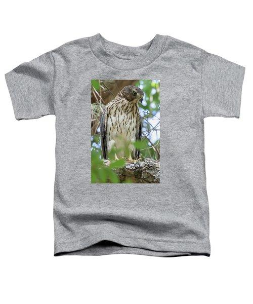Fledgling Red-shouldered Hawk 2 Toddler T-Shirt