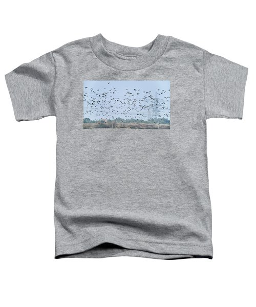 Flock Of Beautiful Migratory Lapwing Birds In Clear Winter Sky Toddler T-Shirt by Matthew Gibson