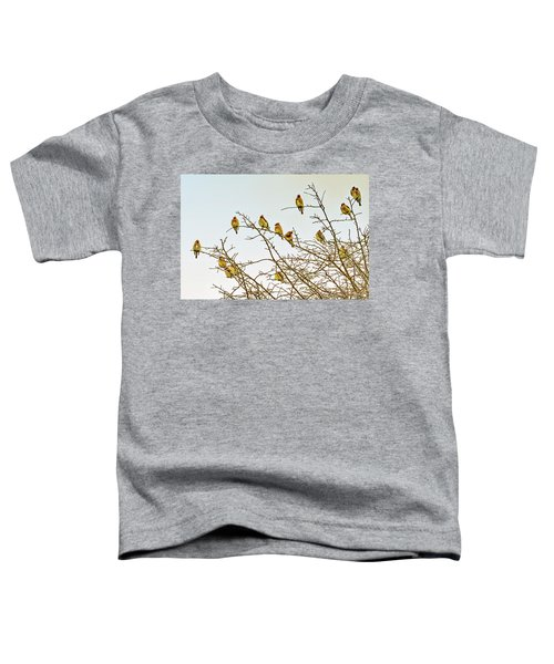 Flock Of Cedar Waxwings  Toddler T-Shirt by Geraldine Scull