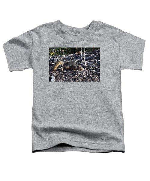 Squirrel Pprh Woodland Park Co Toddler T-Shirt