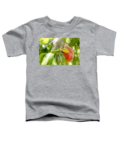 Fresh Peach Hanging In Orchard Toddler T-Shirt
