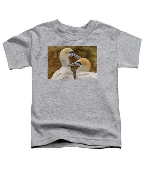 Gannets 4 Toddler T-Shirt by Werner Padarin