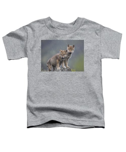 Gray Wolf Canis Lupus Pups In Light Toddler T-Shirt