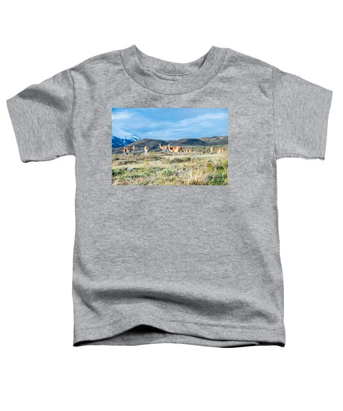 Guanaco In Patagonia Toddler T-Shirt
