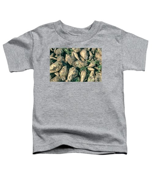 Harvested Sugar Beets Toddler T-Shirt