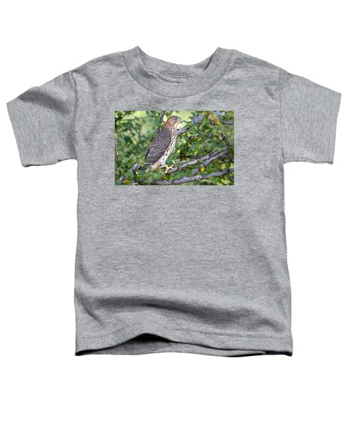 Hawk  Toddler T-Shirt