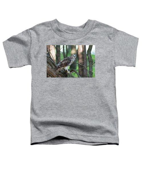 Hawk Portrait Toddler T-Shirt
