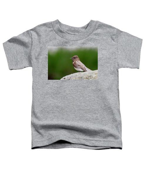 Black Phoebe Toddler T-Shirt