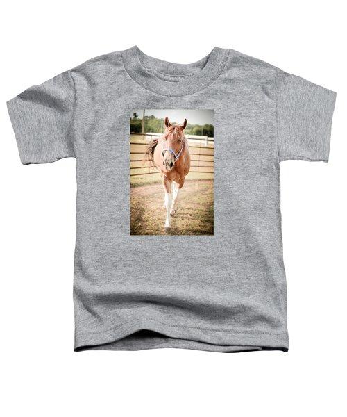 Horse Walking Toward Camera Toddler T-Shirt