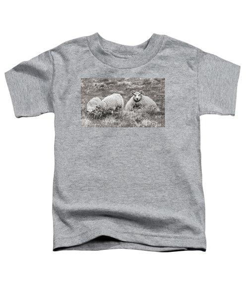 Iceland Woolly Bear Sheep Toddler T-Shirt