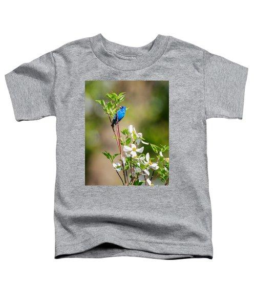 Indigo Bunting In Flowering Dogwood Toddler T-Shirt by Bill Wakeley