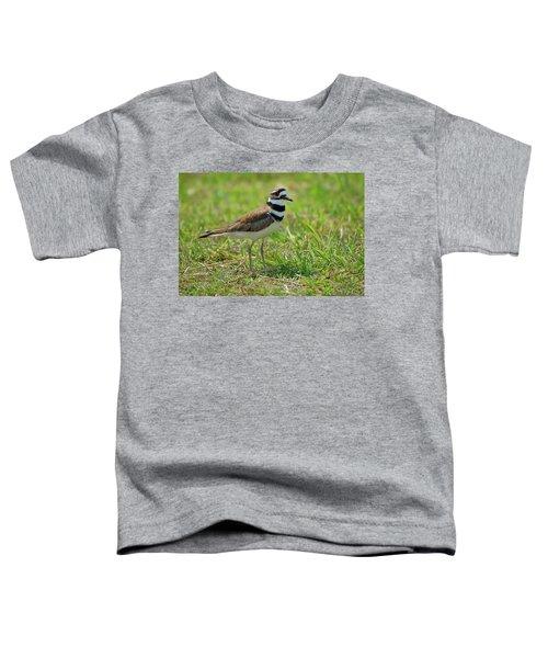 Killdeer Toddler T-Shirt by Rich Leighton