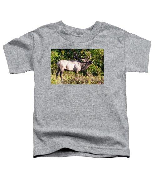 Large Bull Elk Bugling Toddler T-Shirt