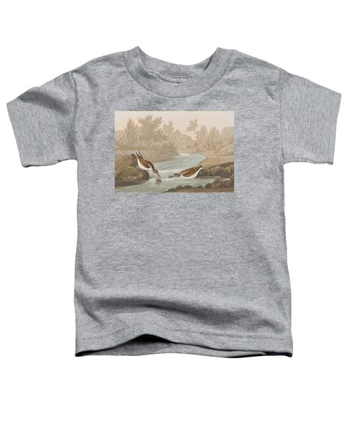 Little Sandpiper Toddler T-Shirt by John James Audubon