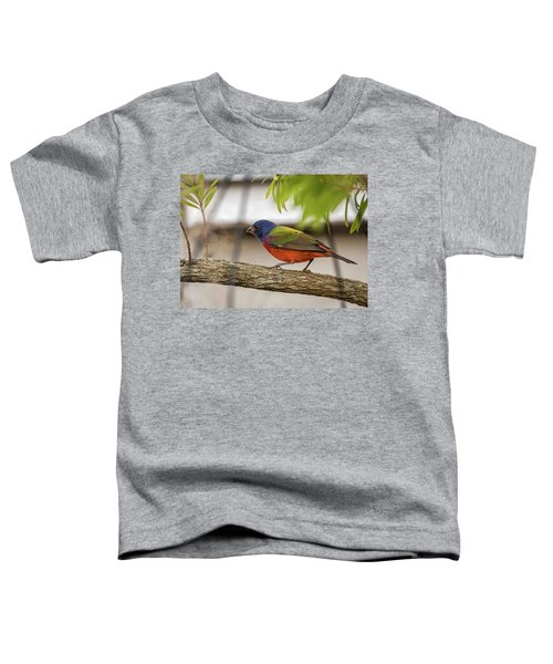 Male Painted Bunting Toddler T-Shirt
