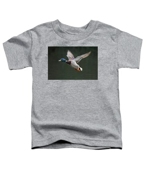 Mallard Drake In Flight Toddler T-Shirt