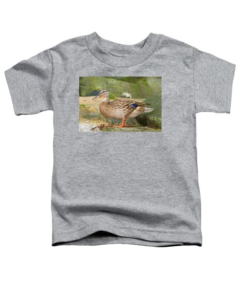 Mallard Duck Toddler T-Shirt