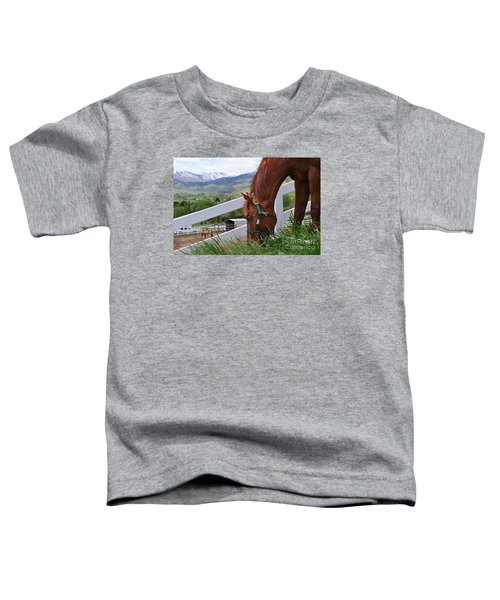 Mccool Grazing Toddler T-Shirt
