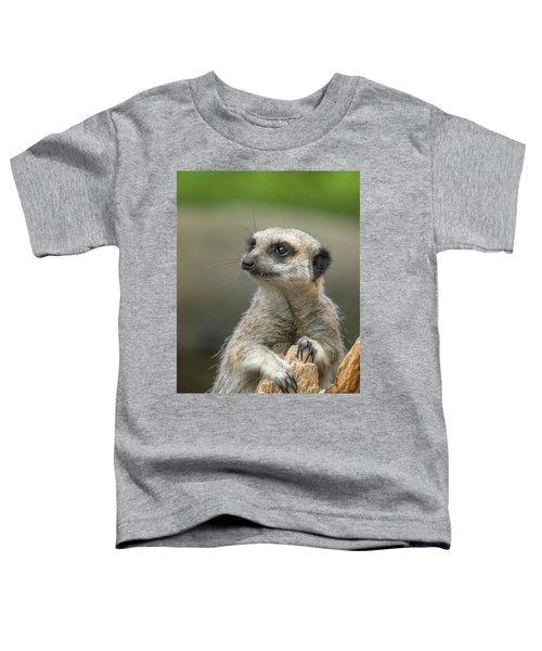 Meerkat Model Toddler T-Shirt