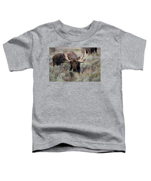 Moose In The Sage Toddler T-Shirt
