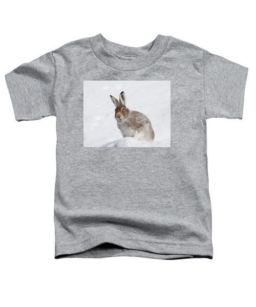 Mountain Hare In Winter Toddler T-Shirt