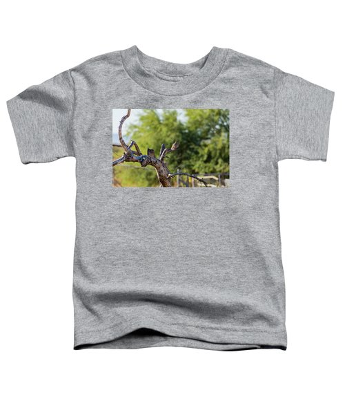 Mourning Dove In Old Tree Toddler T-Shirt