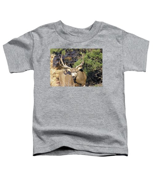 Muledeerbuck6 Toddler T-Shirt