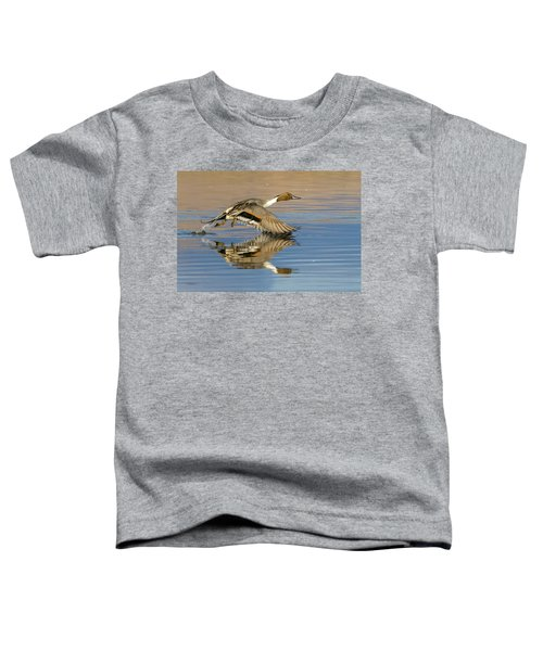 Northern Pintail With Reflection Toddler T-Shirt