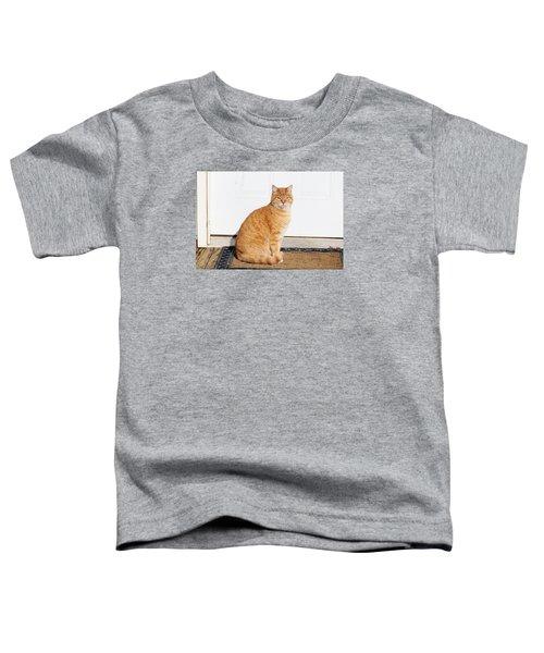 Orange Tabby Cat Toddler T-Shirt