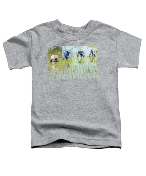 Paddy Field 1 Toddler T-Shirt by Werner Padarin
