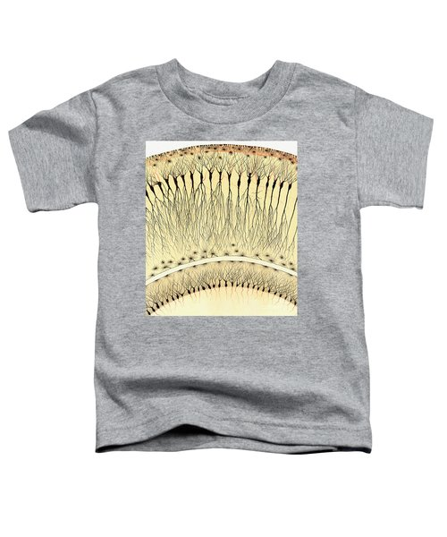 Pes Hipocampi Major Santiago Ramon Y Cajal Toddler T-Shirt