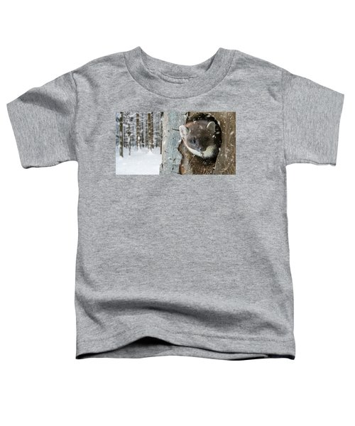 Pine Marten In Tree In Winter Toddler T-Shirt