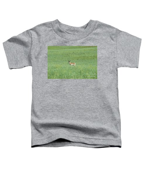 Pronghorn In A Sea Of Green Toddler T-Shirt