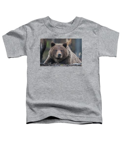 Raw, Rugged And Wild- Grizzly Toddler T-Shirt