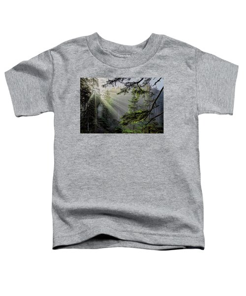Morning Rays Through An Oregon Rain Forest Toddler T-Shirt