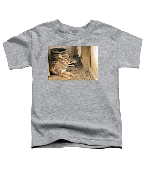 Resting Coyote Toddler T-Shirt