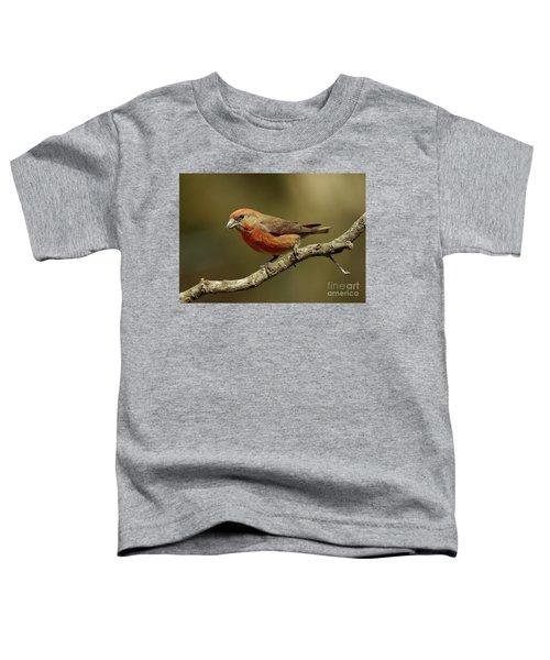 Roaming Crossbills-1 Toddler T-Shirt
