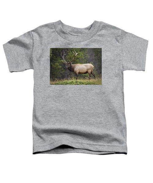 Rocky Mountain National Park Bull Elk Toddler T-Shirt