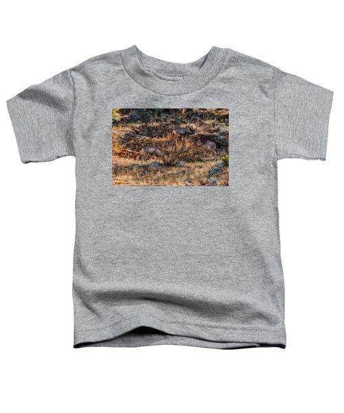Rocky Mountain National Park Deer Colorado Toddler T-Shirt