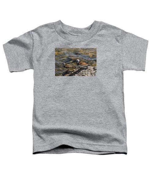 Ruddy Turnstone Toddler T-Shirt