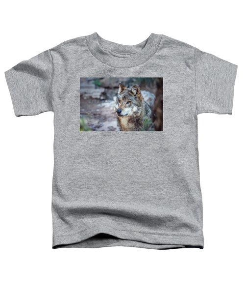Sancho Searching The Area Toddler T-Shirt