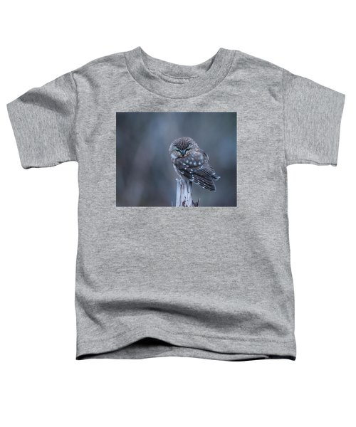 Saw-whet Owl Toddler T-Shirt
