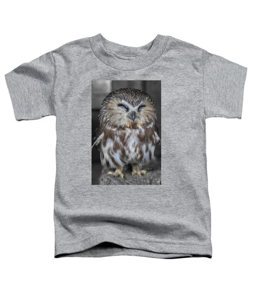 Saw Whet Owl Toddler T-Shirt