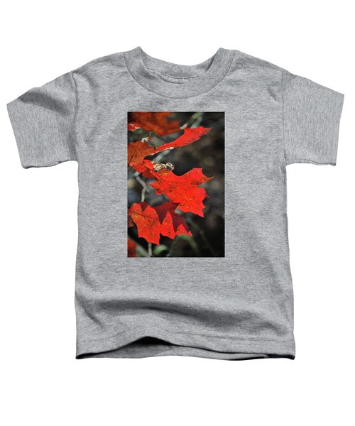 Scarlet Autumn Toddler T-Shirt