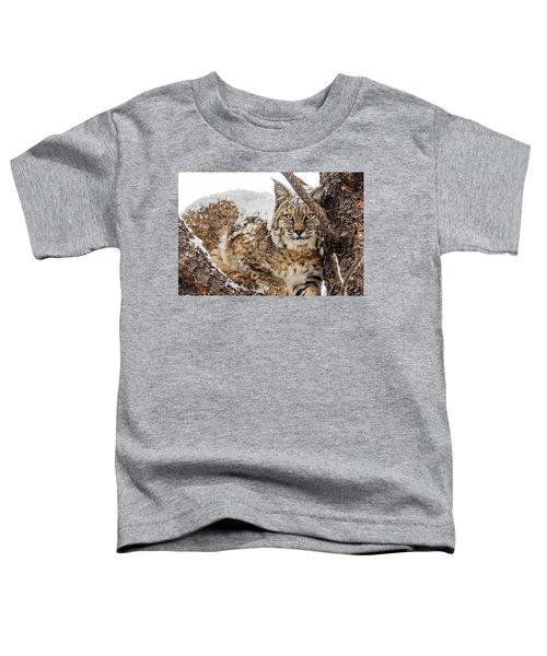 Snowy Bobcat Toddler T-Shirt