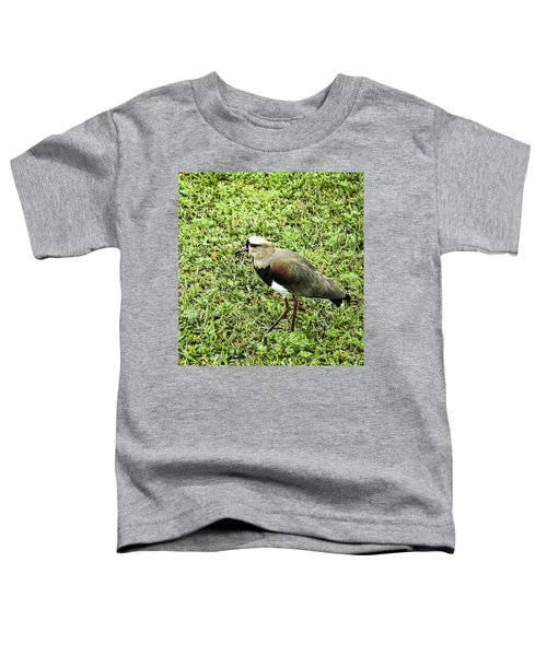 Southern Lapwing Toddler T-Shirt by Norman Johnson