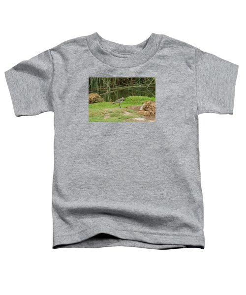 Southern Lapwing On Shore Toddler T-Shirt by Robert Hamm