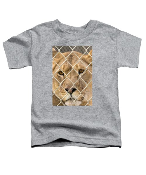 Staring Lioness Toddler T-Shirt
